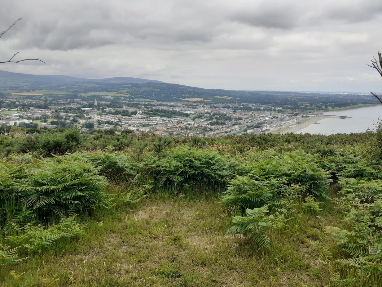 Photo of country showing ferns and city