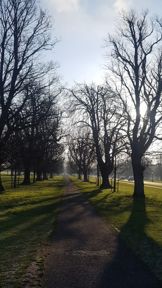 Photo of trees and path in Phoenix Park Dublin