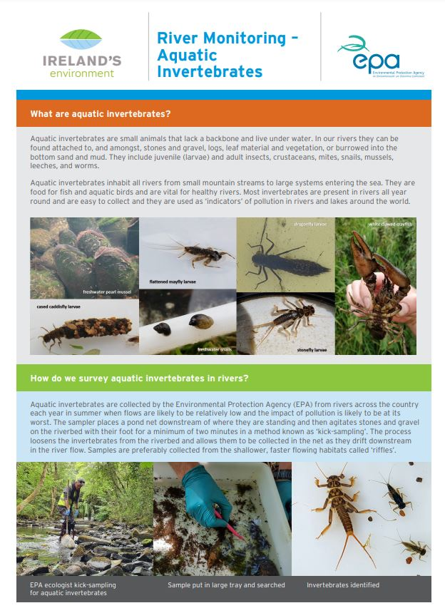 Infographic of River monitoring aquatic invertebrates thumbnail