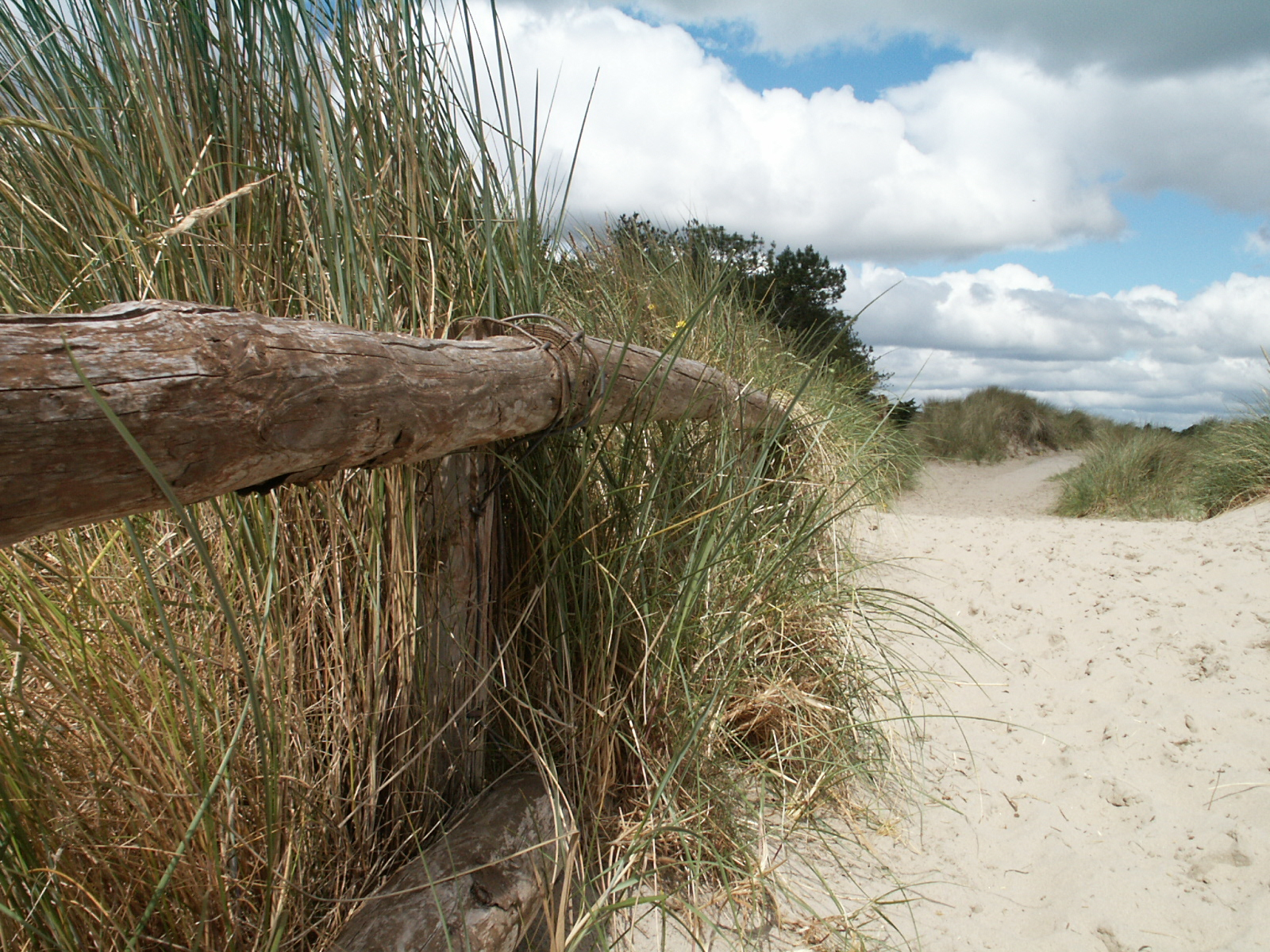 Photograph of Curracloe County Wexford