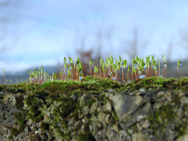 photo of moss