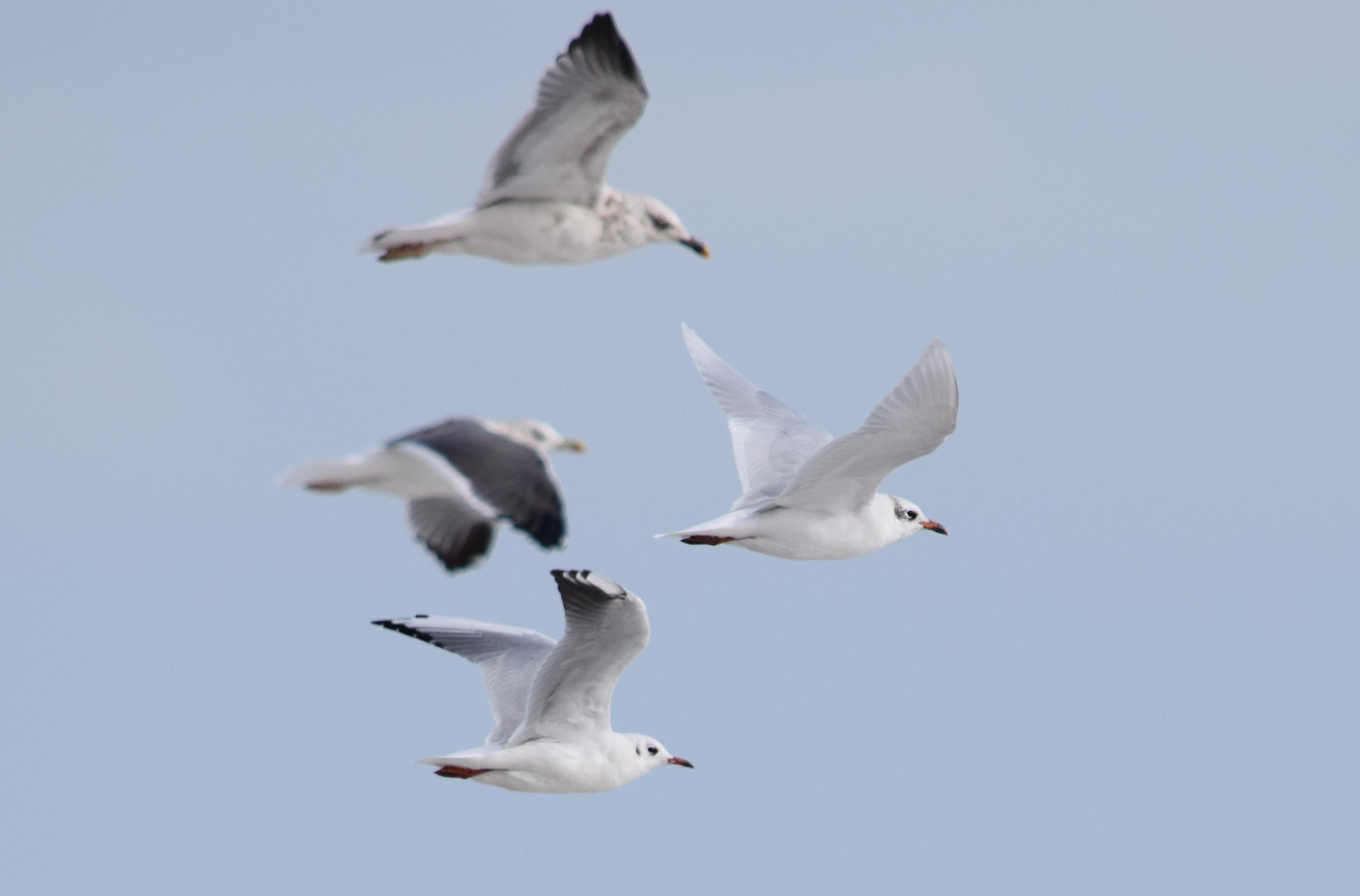 photo of seabirds