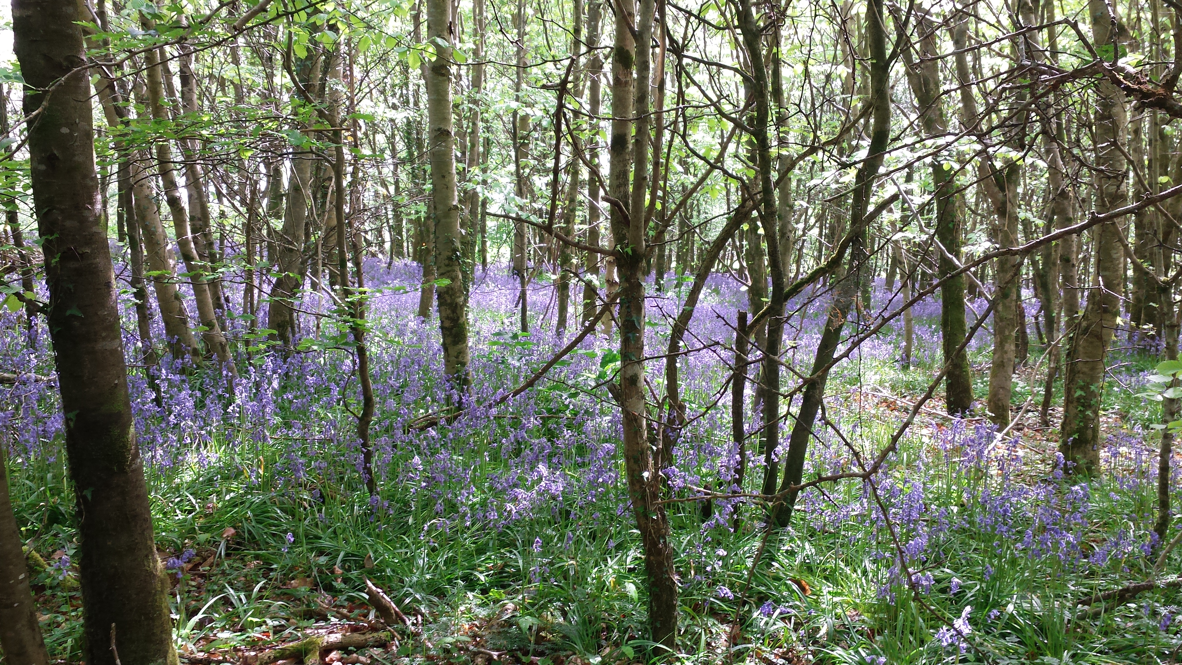 photograph from Tintern woods wexford