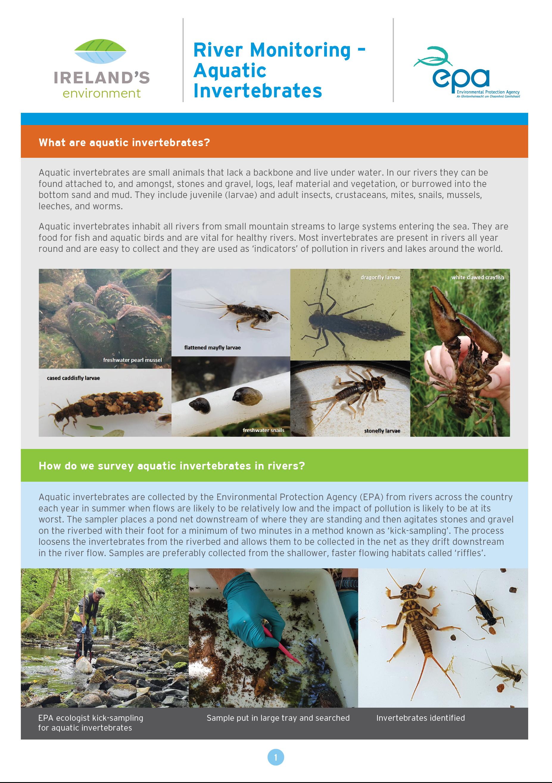 River monitoring aquatic invertebrates factsheet