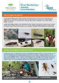 River Monitoring – Aquatic Invertebrates