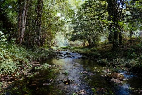 river flowing through trees